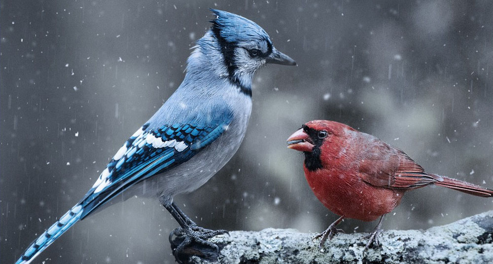 bird photography by henry
