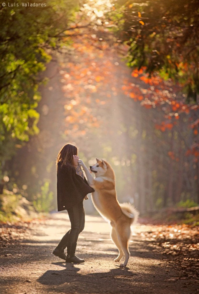 dog photography by luis