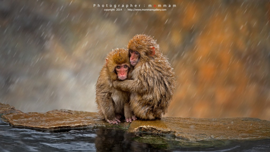 wildlife photography animal by mommam