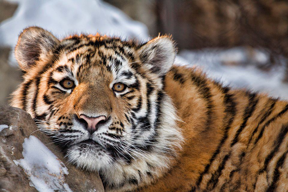 wildlife photography by jeff