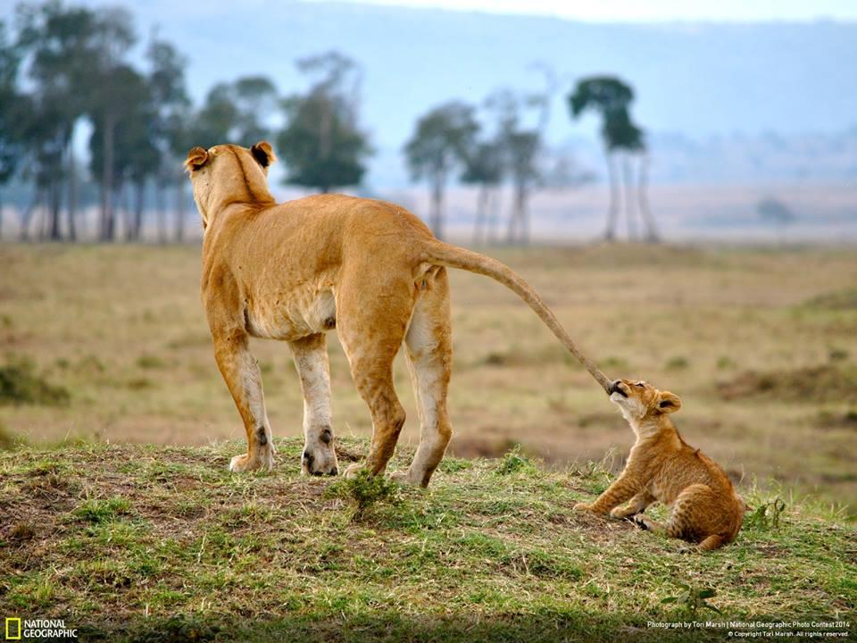 wildlife photography by tori