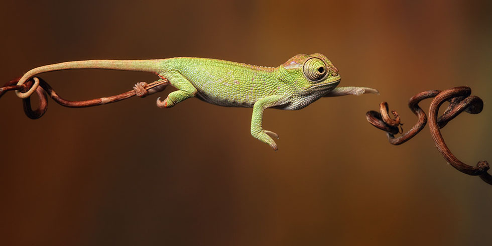 1 lizard photography inspiration