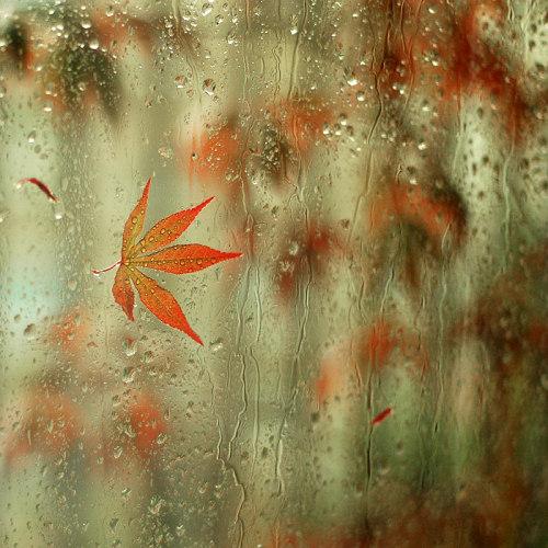 10 rain photography