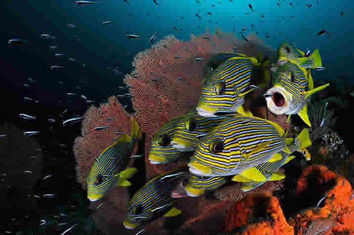 11 fish underwater photography