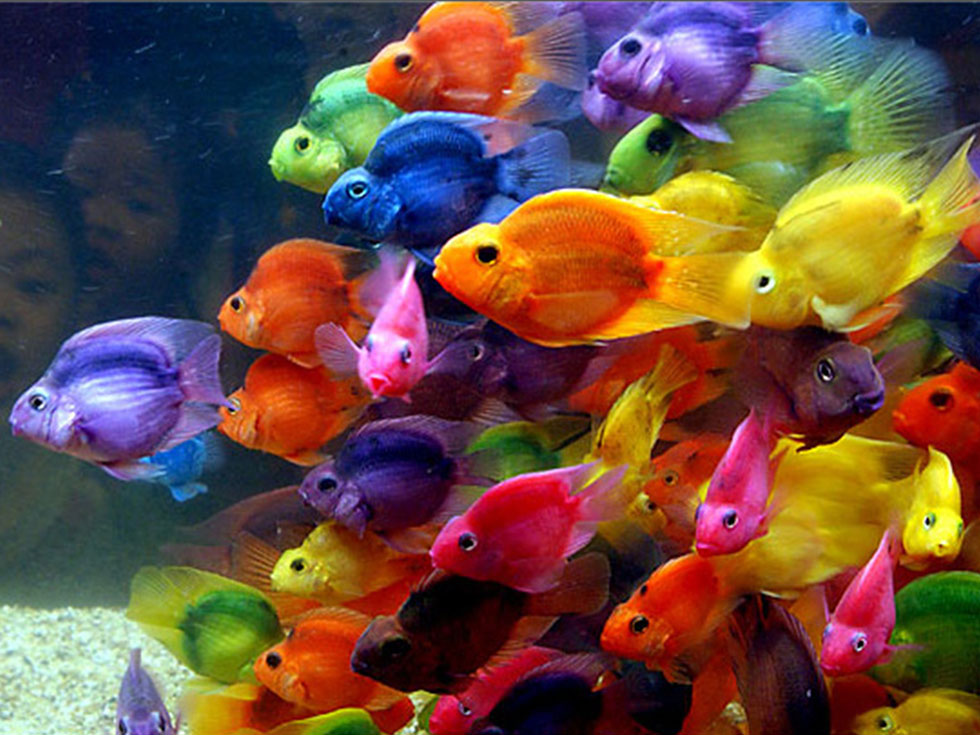 12 fish colorful photography