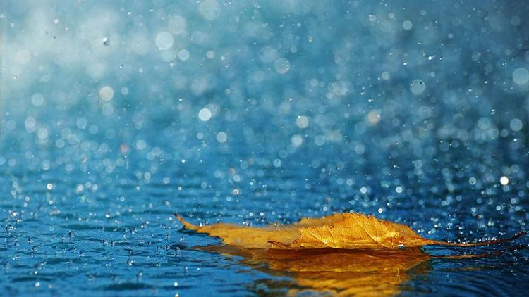 12 rain photography