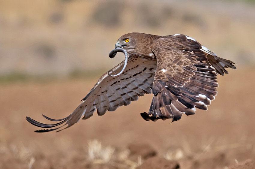 13 bird photography eagle