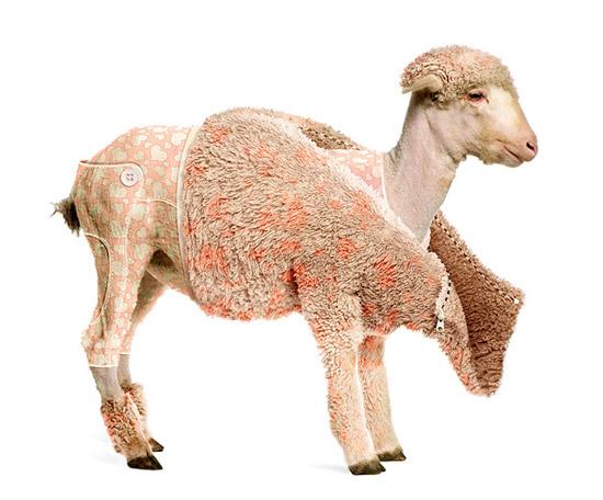 13 goat photo manipulation