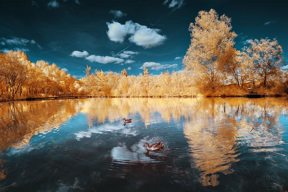 infrared photography -  13