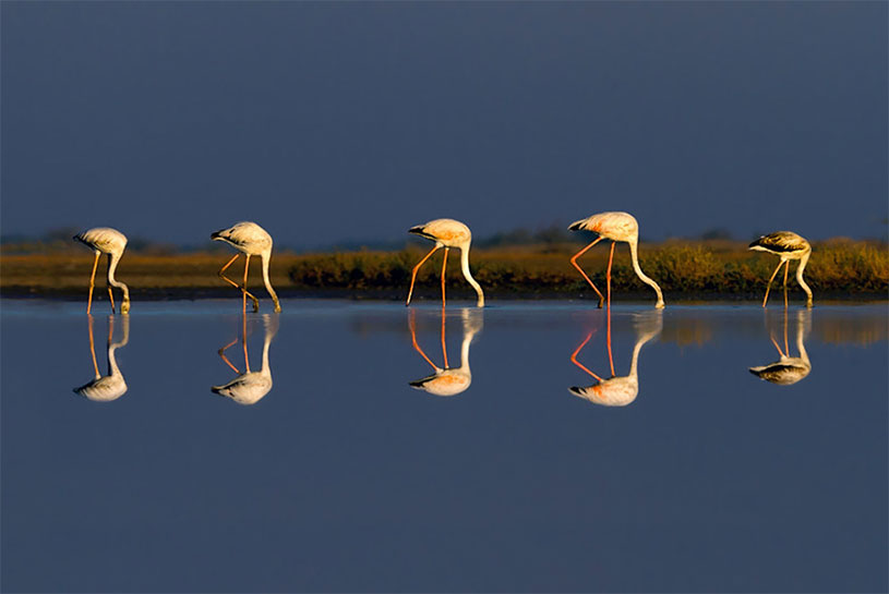 14 crane reflection photography