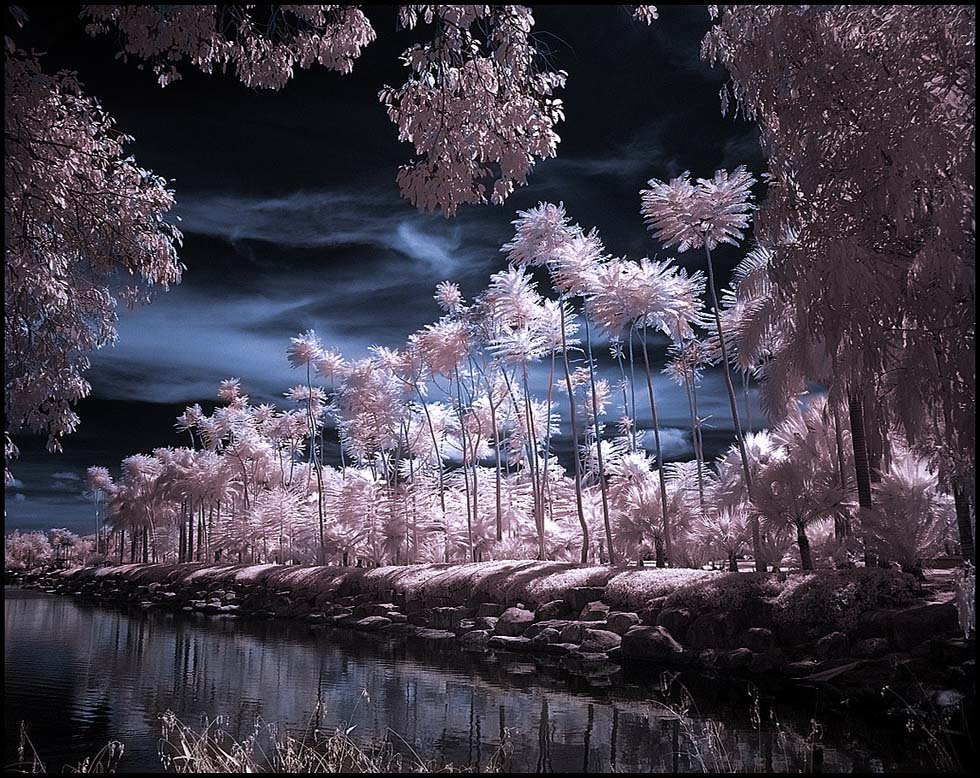 infrared photography -  15