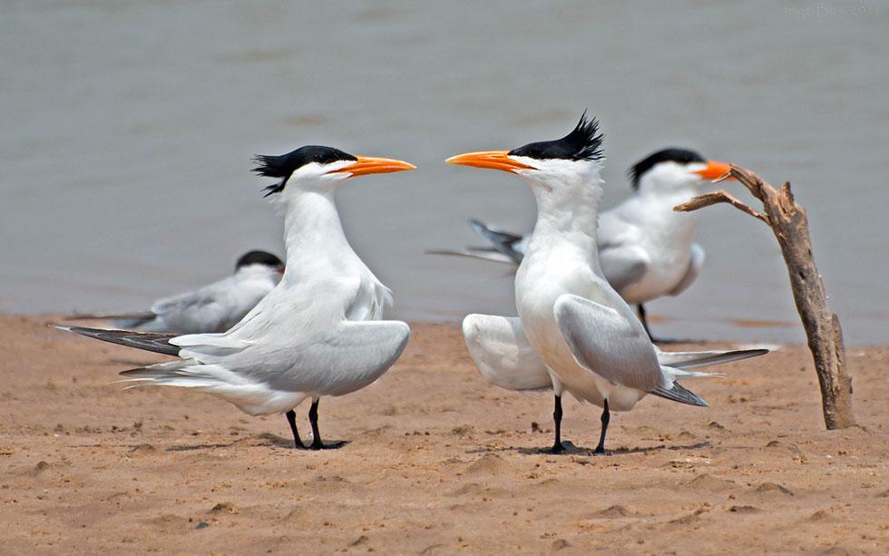 16 bird photography j labrador