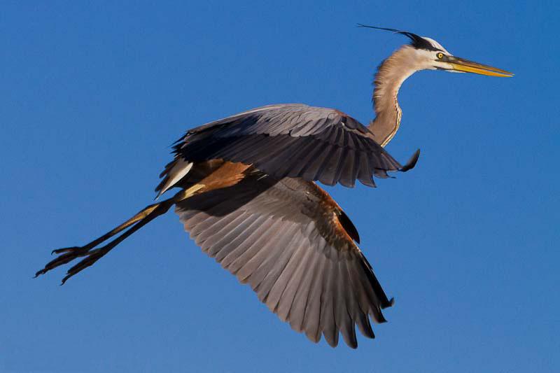 18 bird photography rui teixeira