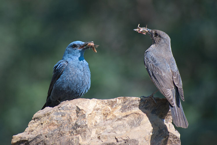 19 bird photography sergio david silva