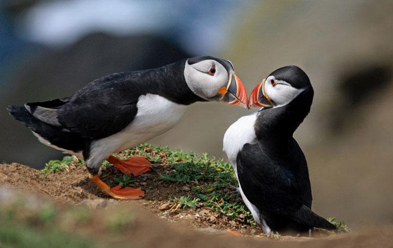 2 beautiful bird photography