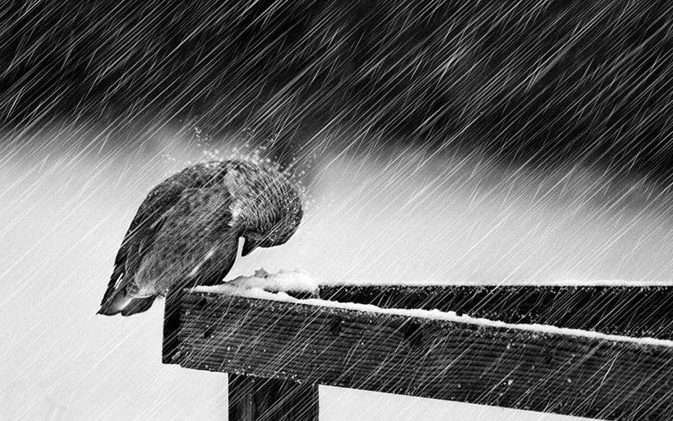20 rain photography