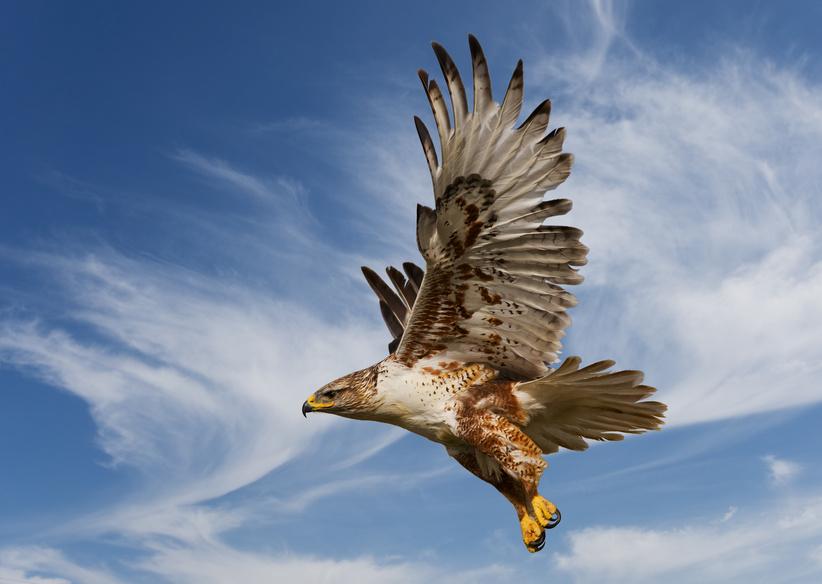 21 eagle bird photography