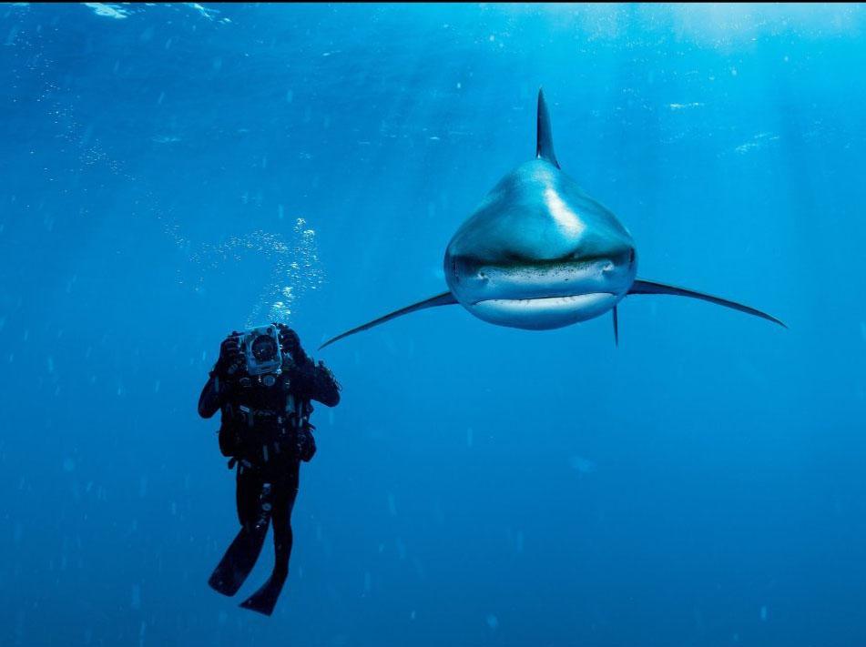 23 man underwater photography