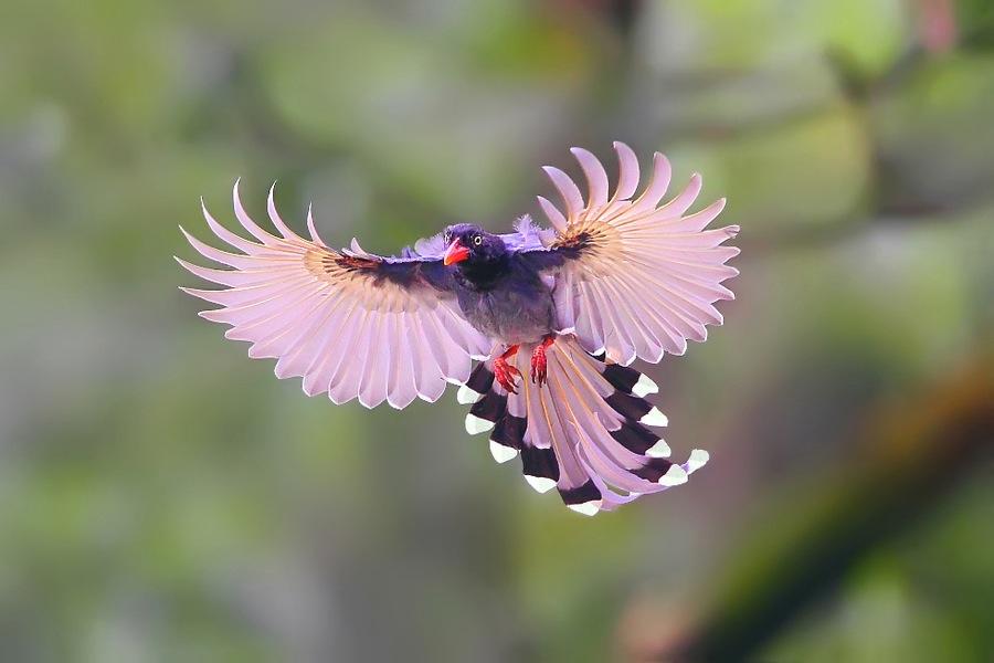 23 pink bird photography