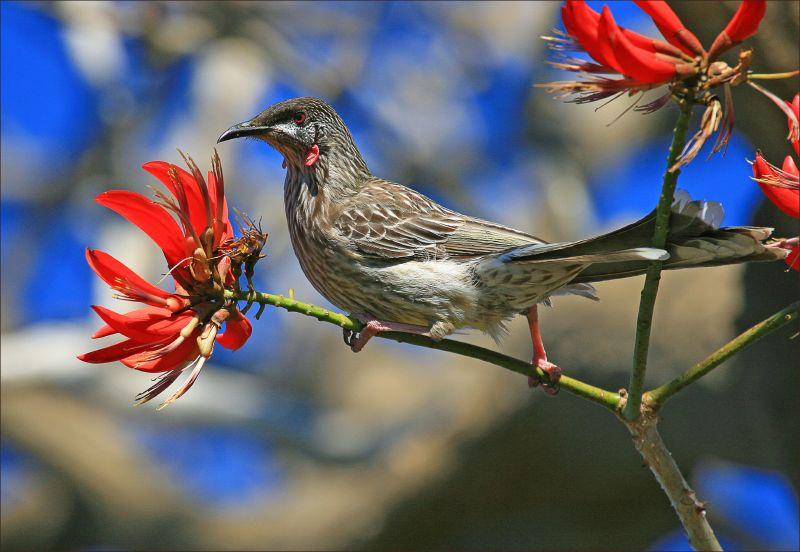 25 spring bird photography