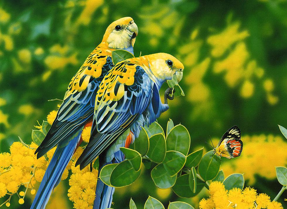 26 yellow bird photography