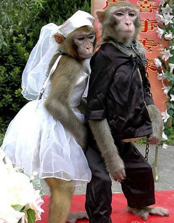 3 monkey funny photography