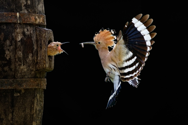 4 beautiful bird photography