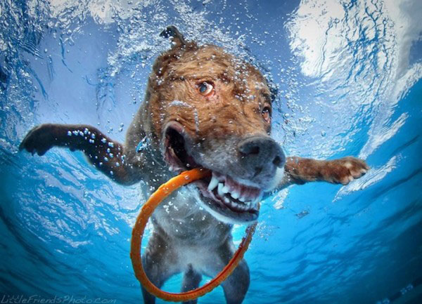 4 dog underwater photography