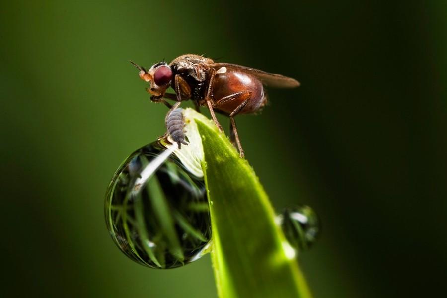4 fly macro photography by john cogan