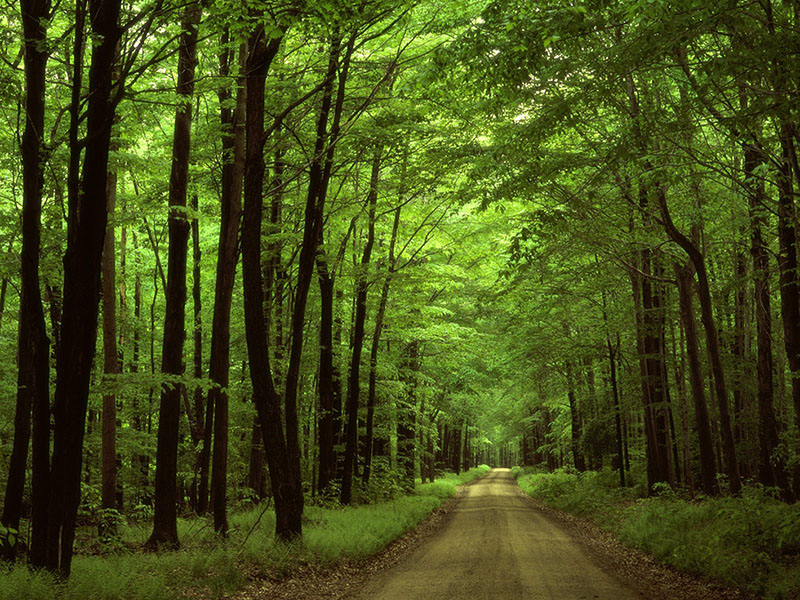 forest photography -  4