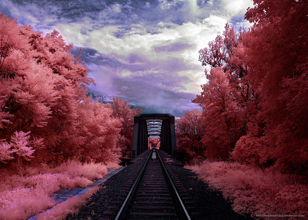 infrared photography -  4