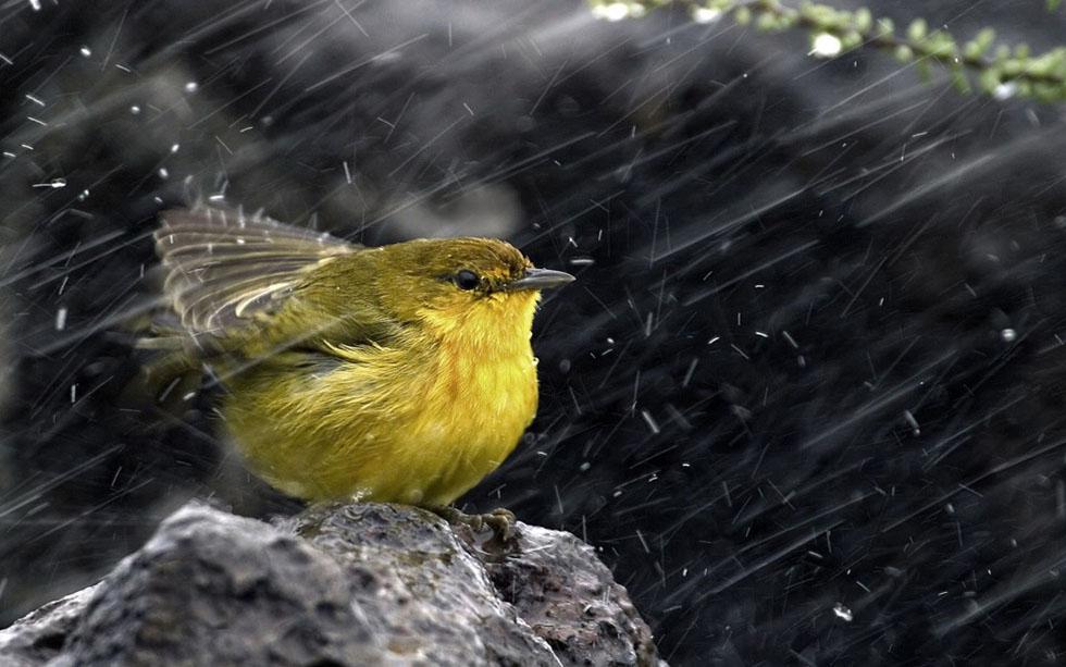4 rain photography