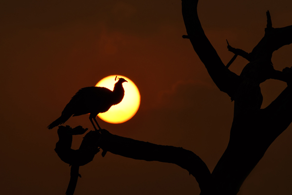 4 silhouette photography