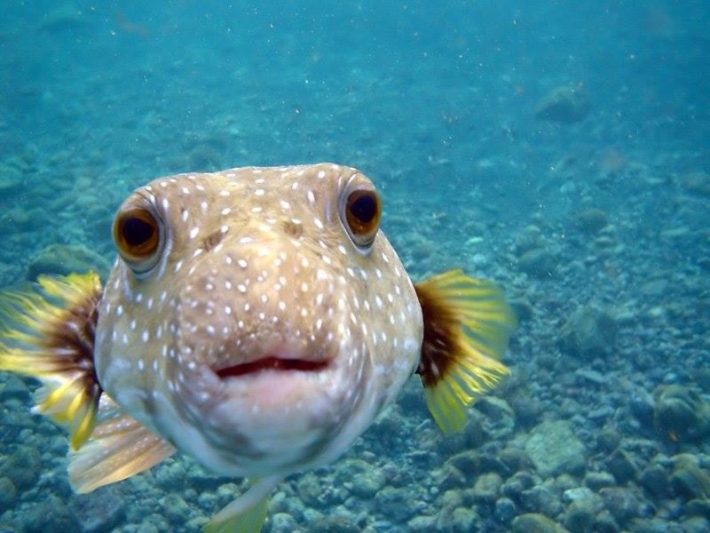 7 fish underwater photography