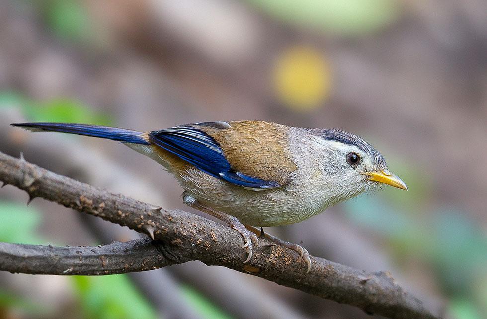 8 bird photography deb