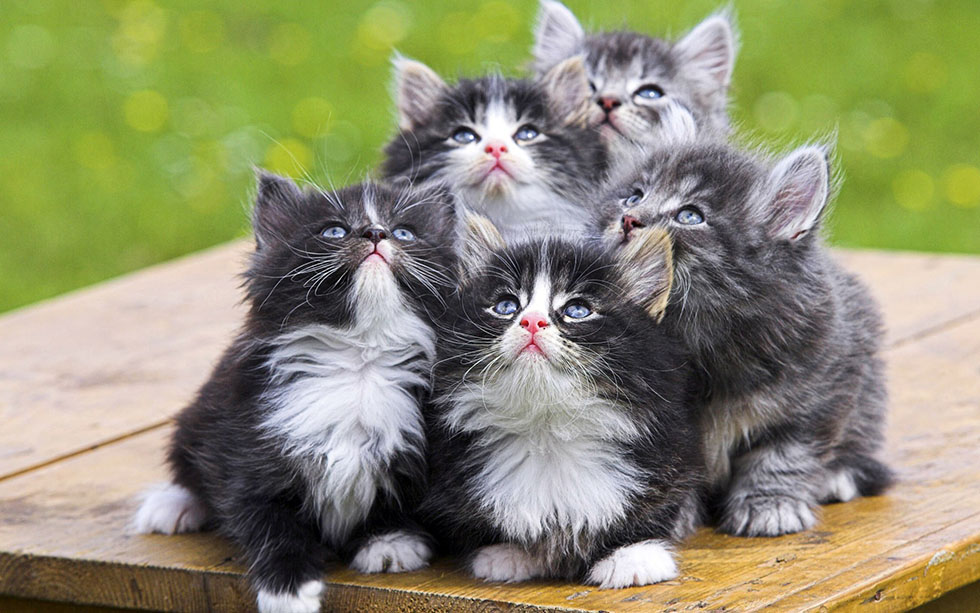 8 cat funny photography