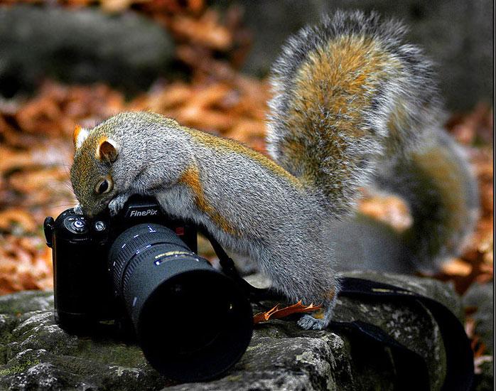 8 digital photography tutorials