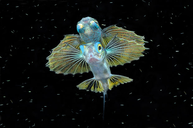 8 fish underwater photography