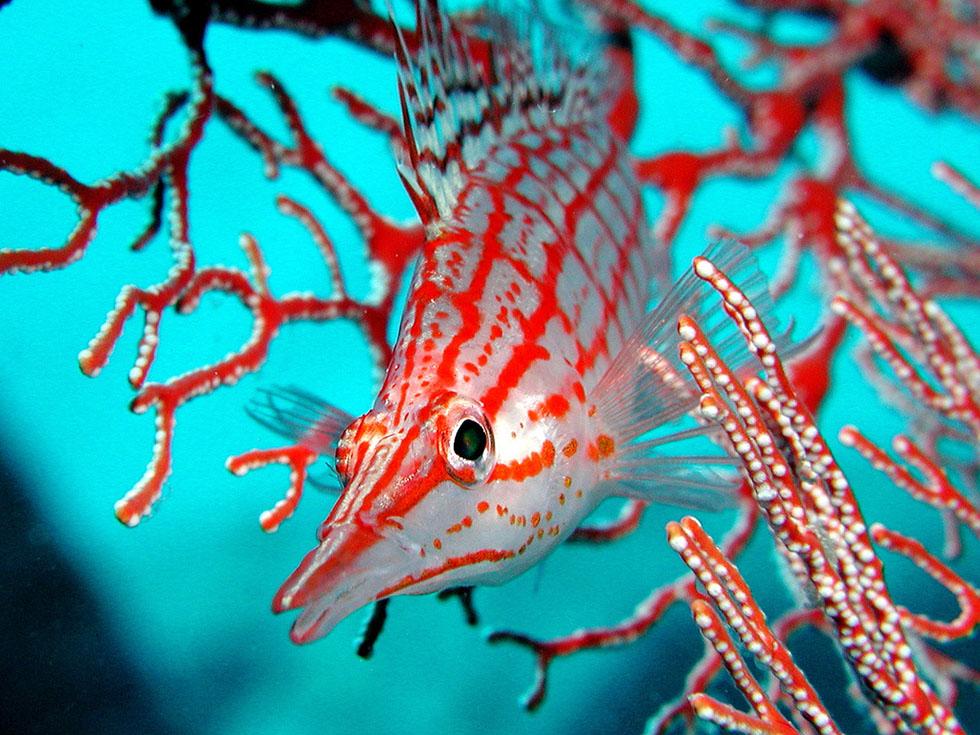 9 fish underwater photography