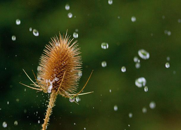 9 rain photography