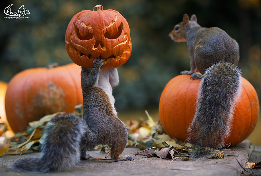 9 squirrel funny photography