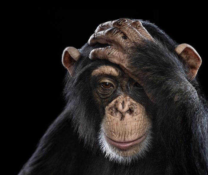 animal photography brad wilson