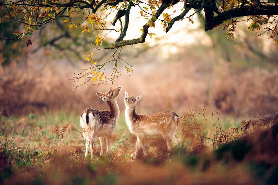 deer animal photography
