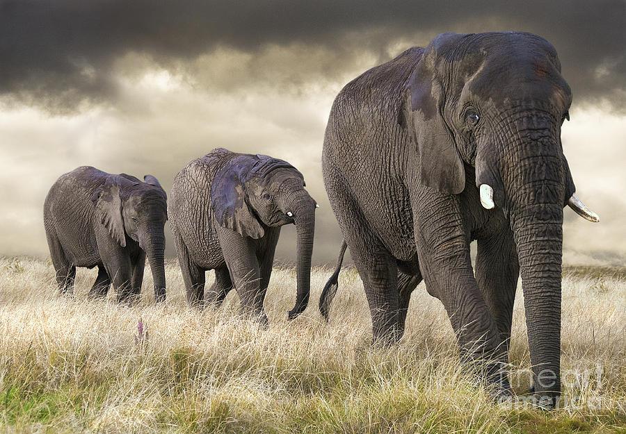 elephant animal photography by marcel van balken