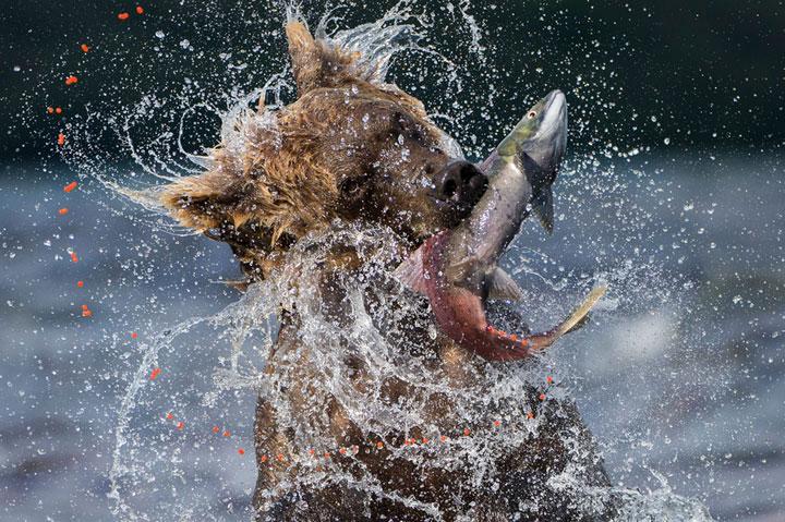 fish wildlife photography