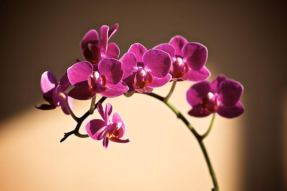 flower photography george c