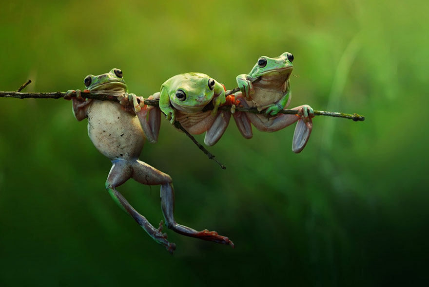 frog best wildlife photography
