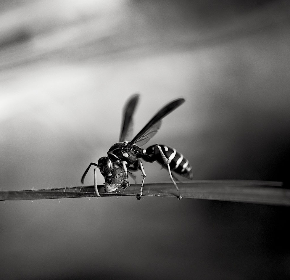 insect black white photography cuba