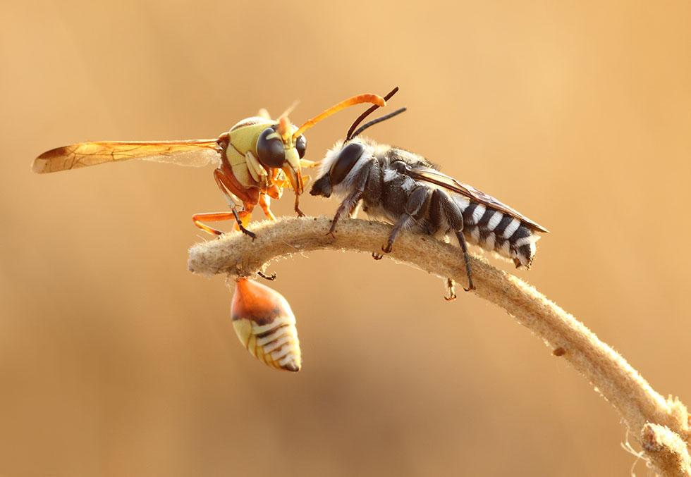 insect macro photography karthi keyan