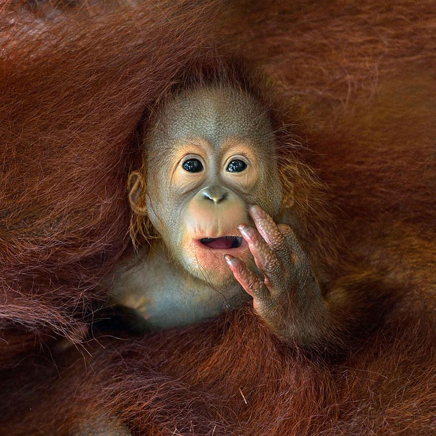 monkey wildlife photography